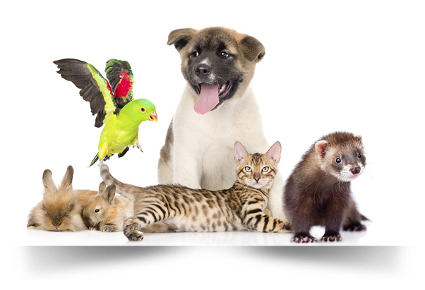 Skyvell in der Tierpflege